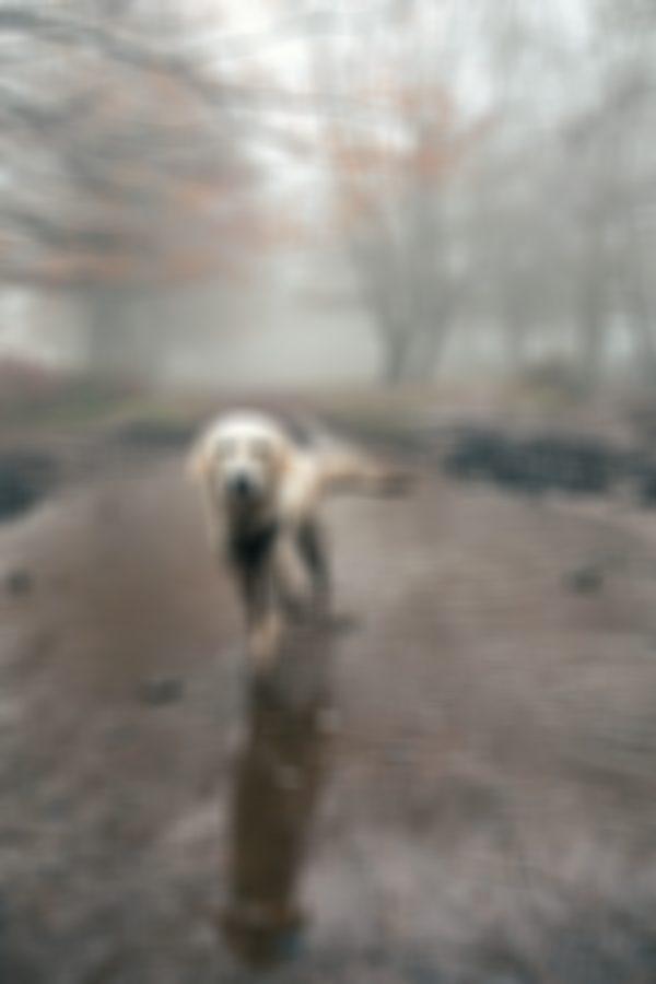 Leo – Dog Photography