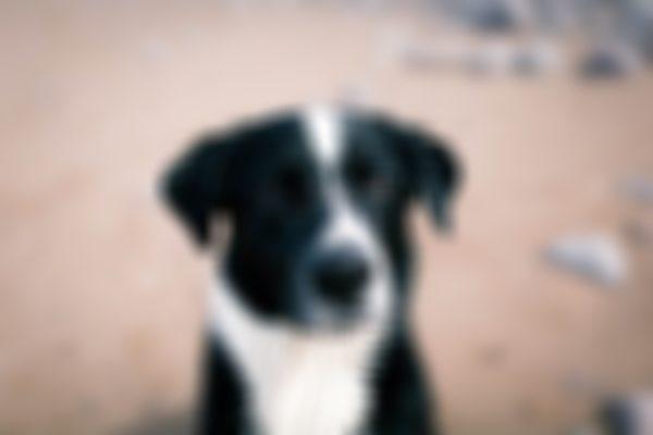 Beach Dog Photography
