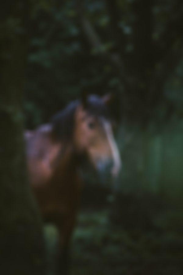 Quantock Pony