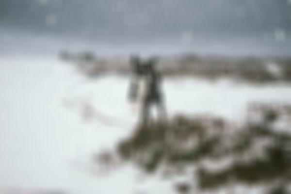 Snow Dog Photography