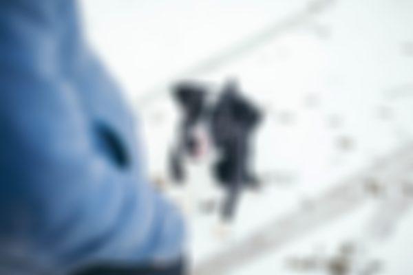 Snow Dog Portrait